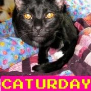 Caturday-Grumpy Cat Part 2.